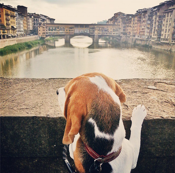 dog in florence italy @girlinflorence