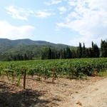 A Wine Affair in the Languedoc
