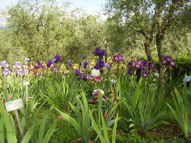 The Iris Garden in Florence, Photo credit: wikimedia commons
