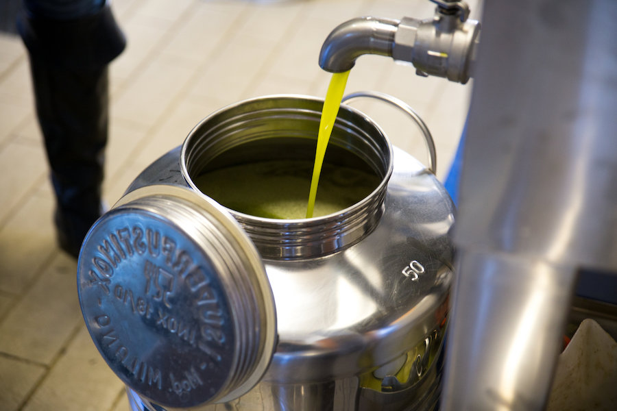 Fresh olive oil during harvest time. Photo credit: Arianna Cini