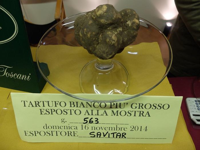 giant white truffle san miniato   girlinflorence