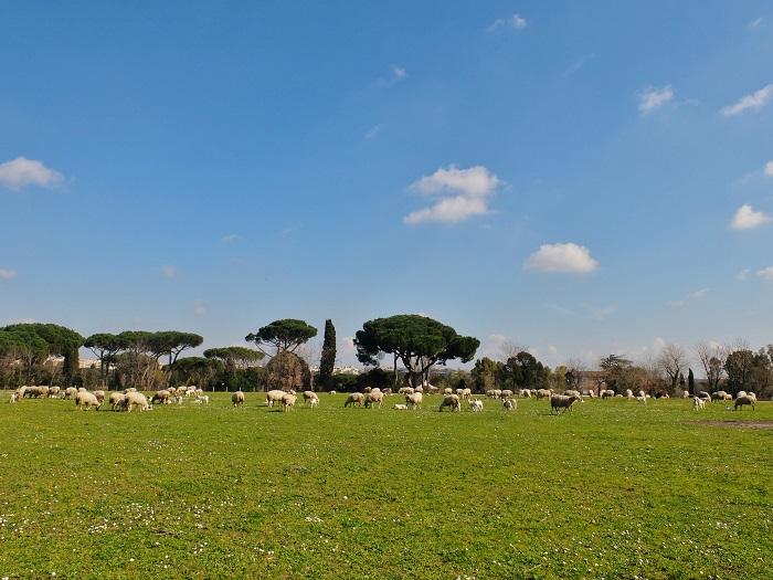 Caffarella park