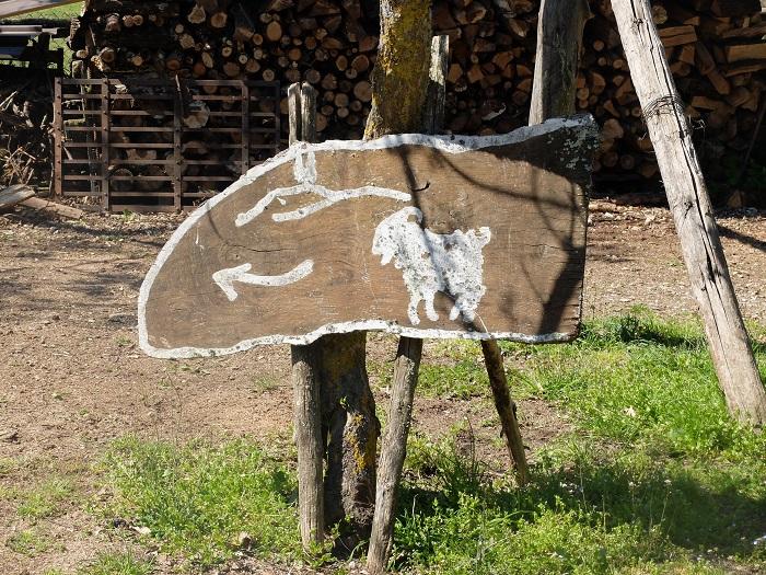 cashmere goat farm tuscany